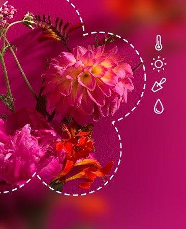 PictureThis1-366x450 Cara Tanaman Tumbuh: Pelajari kehidupan tanaman lewat PictureThis.