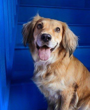 DogCam1-366x450 Selfie Piaraan: Tangkap Sisi Terbaik Piaraan Anda dengan DogCam.