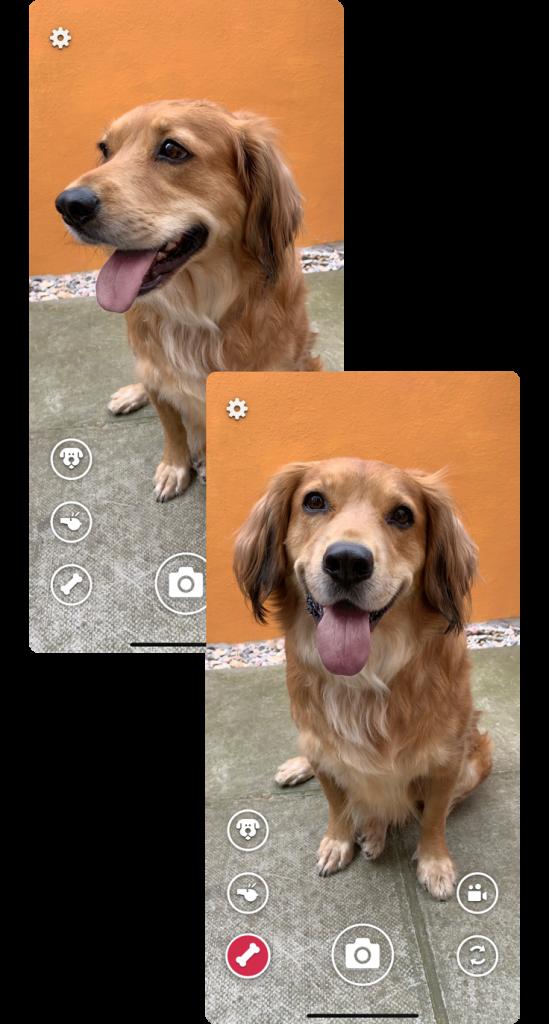 DogCam2-549x1024 Selfie Piaraan: Tangkap Sisi Terbaik Piaraan Anda dengan DogCam.